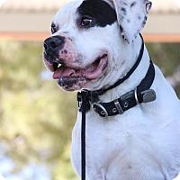 Adopt A Pet :: Joaquin - Las Vegas, NV
