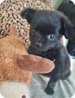 Small Dog Rescue Denver