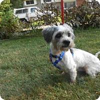 Adopt A Pet :: BJ - Portage, IN