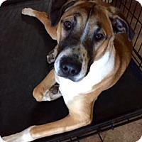 Adopt A Pet :: WRIGLEY - Chandler, AZ