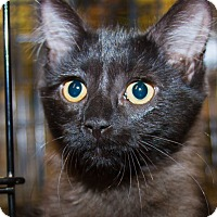 Adopt A Pet :: Brienne - Irvine, CA