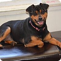 Adopt A Pet :: Sparky - Lafayette, IN