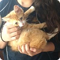 Adopt A Pet :: Butters - Sparta, NJ