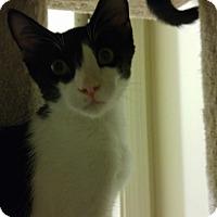 Adopt A Pet :: Checkers - Tucson, AZ