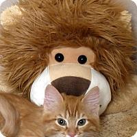 Adopt A Pet :: Flynn Rider - Kerrville, TX