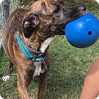 Adopt A Pet :: Marley (ETAA) - Hagerstown, MD
