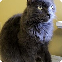 Domestic Longhair Cat for adoption in Port Hope, Ontario - Teddy