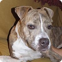 Adopt A Pet :: Nonna - Nashville, TN