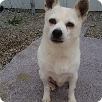 Terrier (Unknown Type, Small)/Jack Russell Terrier Mix Dog for adoption in Port Clinton, Ohio - BAM BAM