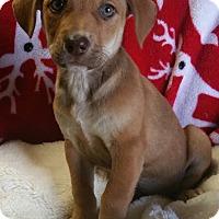 Adopt A Pet :: Cupid - Los Angeles, CA