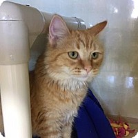Adopt A Pet :: Squish - Fort Collins, CO