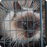 Adopt A Pet :: A414534 - San Antonio, TX