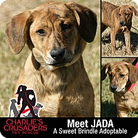 Adopt A Pet :: Jada - Spring City, PA