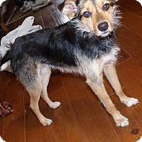 Adopt A Pet :: Annie - Bedminster, NJ
