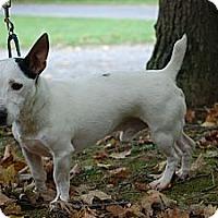 Adopt A Pet :: Roscoe - Rhinebeck, NY