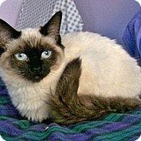 Adopt A Pet :: Misha - Davis, CA