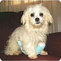 Adopt A Pet :: Ashton - Mooy, AL