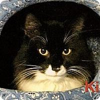 Adopt A Pet :: Kirby - Medway, MA