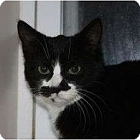 Adopt A Pet :: Bailey (LE) - Little Falls, NJ