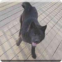 Adopt A Pet :: Kenya - Belleville, MI