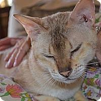 Adopt A Pet :: Cindy - N. Berwick, ME