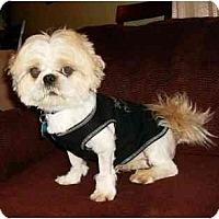 Adopt A Pet :: Luke - Mooy, AL