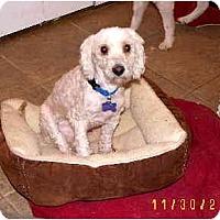 Adopt A Pet :: Fetzer - Scottsdale, AZ