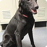 Adopt A Pet :: Miranda - Wytheville, VA
