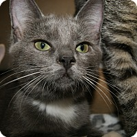 Adopt A Pet :: Sterling - Trevose, PA