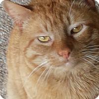 Adopt A Pet :: Buster - brewerton, NY