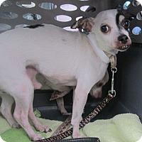 Adopt A Pet :: Donkey - Oak Ridge, NJ