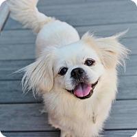 Adopt A Pet :: Tesla - Smyrna, GA