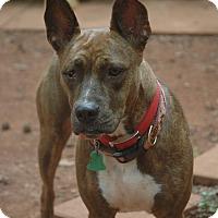 Adopt A Pet :: Yuma - Lawrenceville, GA