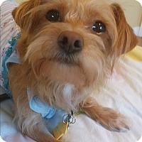 Adopt A Pet :: Pele - Buena Park, CA