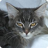 Adopt A Pet :: Tegan M - Sacramento, CA