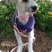 Adopt A Pet :: Jinx - Las Vegas, NV