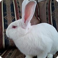 Adopt A Pet :: Huck - Watauga, TX