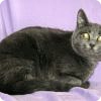 Adopt A Pet :: Raleigh - Powell, OH