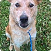 Adopt A Pet :: Rudy - New Kensington, PA