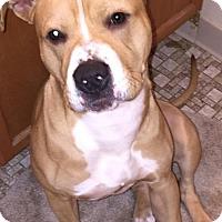 Adopt A Pet :: Zeus- Courtesy Listing - Fredericksburg, VA