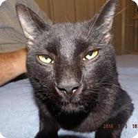 Adopt A Pet :: Weyoun - Florence, TX