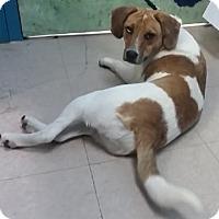 Adopt A Pet :: Bree - Avon, NY