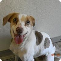 Adopt A Pet :: BELL - Sandusky, OH