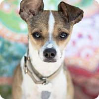 Adopt A Pet :: Twinkie - ADOPTION PENDING! - Carlsbad, CA