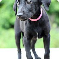 Adopt A Pet :: Sierra - Waldorf, MD