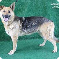 Adopt A Pet :: A085961 - Hanford, CA