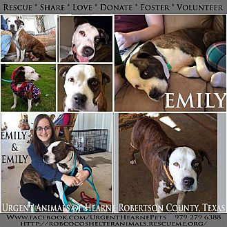 American Pit Bull Terrier Mix Dog for adoption in Hearne, Texas - Emily