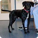 Adopt A Pet :: Gunner #3
