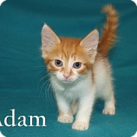 Adopt A Pet :: Adam - Jackson, MS