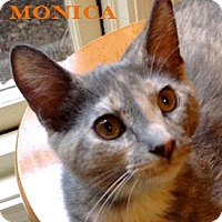Adopt A Pet :: Monica - Baton Rouge, LA